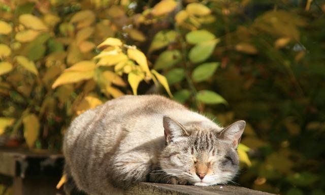 庭で昼寝をする猫