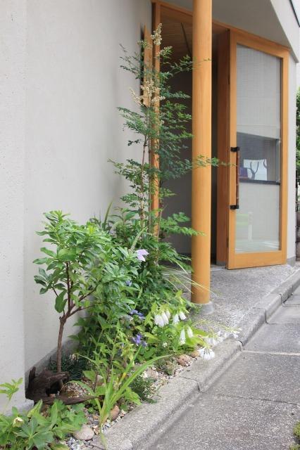 久我原 高級角食三日月 村井 様の店舗植栽6月中旬の景色4