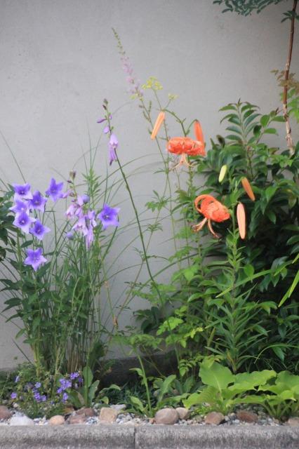 久我原 高級角食三日月 村井 様の店舗植栽7月22日午後6時半頃の景色その2